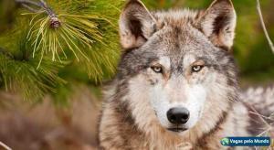 Morar fora e encarar lobos em cada esquina