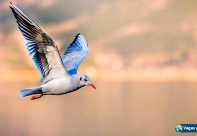 Morar fora: nós os pássaros