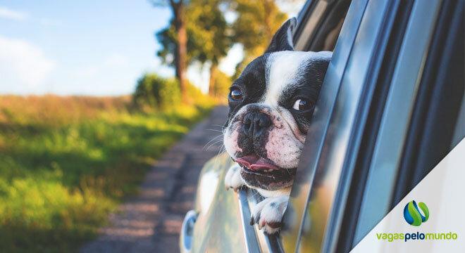 Viajar com cachorro Inglaterra
